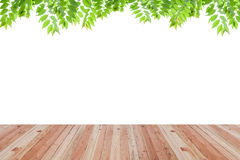 Wood floor texture and green leaves frame on white background. Royalty Free Stock Image