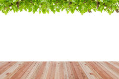 Wood floor texture and green leaves frame on white background. Royalty Free Stock Images