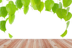 Wood floor texture and green leaves frame on white background. Stock Photos
