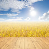 Wood floor Yellow rice field and blue sky for background Stock Images