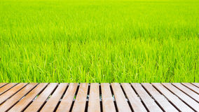 Wood floors in the field Stock Photo
