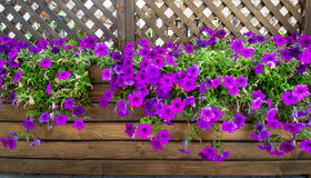 Wood flower box Royalty Free Stock Photo
