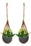 Wood flower pot Royalty Free Stock Photo