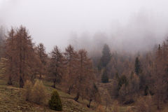 Wood in Fog, Italy Stock Images