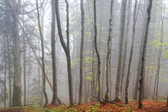 Wood in fog Royalty Free Stock Photography