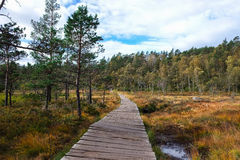 Wood foot bridge over marsh land Royalty Free Stock Image