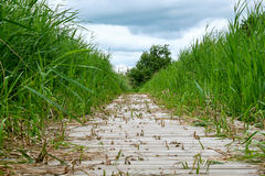 Wood footpath over a wetland Royalty Free Stock Images