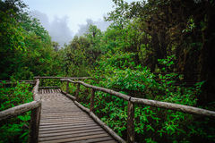 Wood footpath in tropical rain forest. In Chiang Mai, Thailand Royalty Free Stock Photos