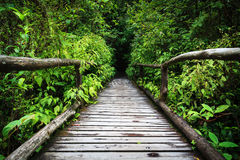 Wood footpath in tropical rain forest in Thailand Royalty Free Stock Photography