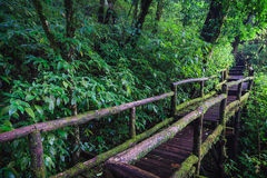 Wood footpath in tropical rain forest in Thailand Stock Photography
