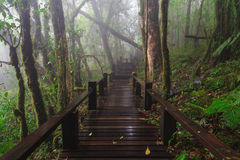 Wood footpath in tropical rain forest in Thailand Stock Photos