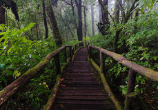 Wood footpath in tropical rain forest in Thailand Stock Photo