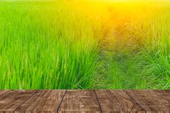 Wood foreground on rice field. Background stock image
