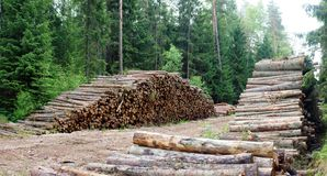 Wood in the forest. Summer time forest view with trees Stock Image