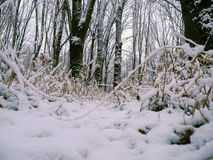 Wood. Forest grass snow winter landscape tree snow morning flora Stock Photo