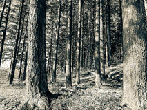 Wood forest royalty free stock photo