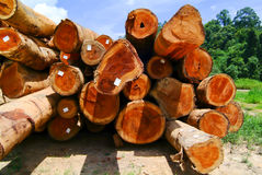 Wood, forestry. Forest business. Stock Photo