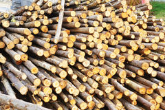 Wood for foundation pile Stock Photo
