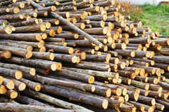 Wood for foundation pile Royalty Free Stock Images