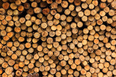 Wood for foundation pile Stock Images