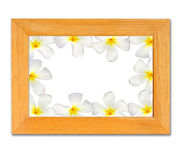 Wood frame with frangipani isolated Stock Photography