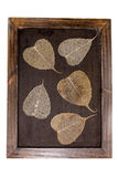 Wood frame and pho leaves Royalty Free Stock Photos