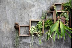 Wood frame with some plant on the wall Royalty Free Stock Image