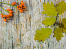 Wood with fruits of autumn to use as background with space for text Stock Photos