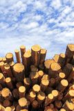 Wood fuel is eco friendly Royalty Free Stock Images