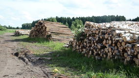 Wood fuel logs stack stock footage