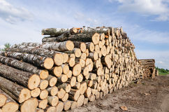 Wood fuel stacks and birch logs near forest Royalty Free Stock Images