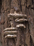 Wood Fungus Stock Photo