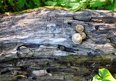 Wood fungus Stock Images