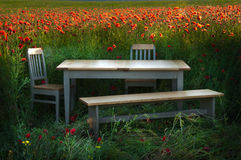 Furniture in corn poppy field Royalty Free Stock Images
