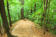 Wood glade. Among wood in August Royalty Free Stock Photo