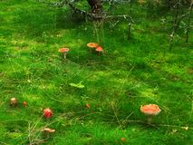 Wood glade from a Fairyland 2 Stock Photos
