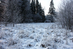 Wood glade in the winter. Royalty Free Stock Photo