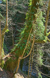 Wood-goblin Stock Photos