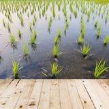 Wood golv och risfält Arkivbilder