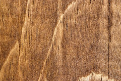 Wood Grain 1. A detailed photo of wood grain. The grain and texture of the wood is very prominent Royalty Free Stock Image