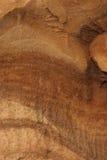 Wood grain. Close up of olive tree wood grain Royalty Free Stock Image