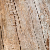 Wood grain. Dried tree trunk without bark, showing attractive wood grain, for background texture Royalty Free Stock Photos