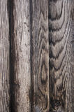 Wood Grain. Weathered Wood grain from the door of a Tudor house royalty free stock images
