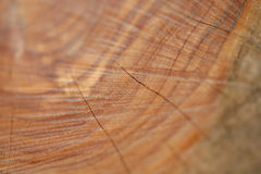 Wood grain macro shot Stock Image