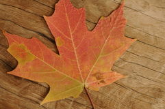 Wood Grain with maple leaf Royalty Free Stock Images