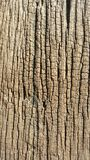 Wood grain. Grain on wood from natural made Stock Images