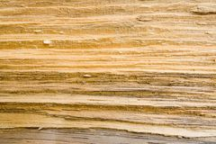Wood Grain Texture 3. A close up of a wood grain texture pattern on split pine timber Royalty Free Stock Images