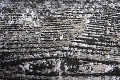 Wood grain texture Stock Images