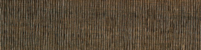 Wood grain texture, the African acacia wood. the texture of the wood, wood grain cut. Wooden texture - bright young wood. Maple wood grain texture modern design royalty free stock images