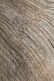 Wood Grain Texture Background. Royalty Free Stock Photography